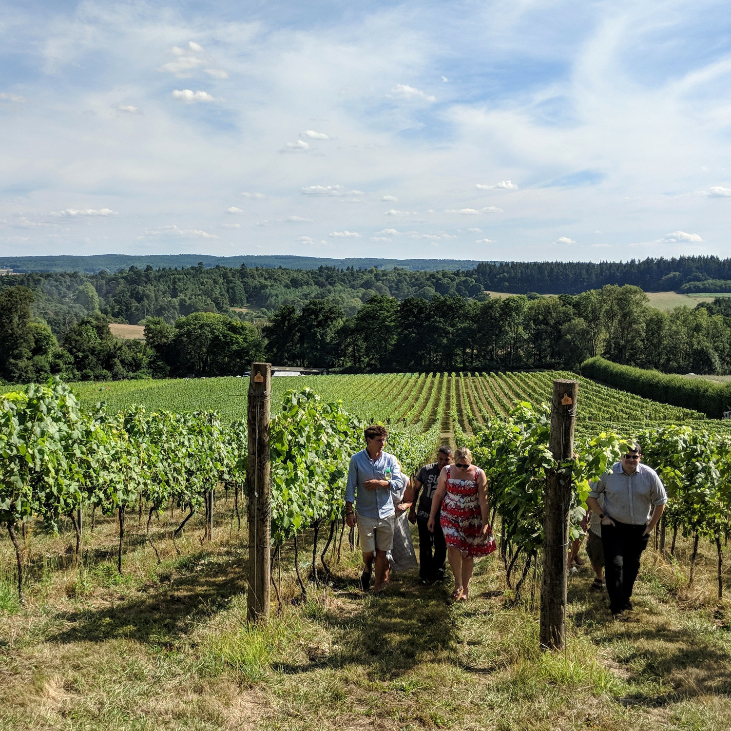 Vineyards Tour in the Surrey Hills