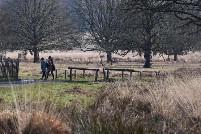 Residents have voiced their concerns about coronavirus spread in Richmond Park as the park authorities warn vistors to physically distance from each other. Image: Heather Smithers / Flickr cc