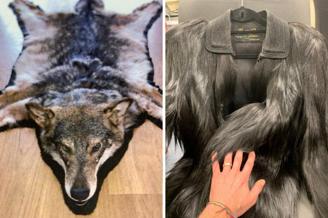 Illegal wolf and monkey skin products, seized by police in Tooting