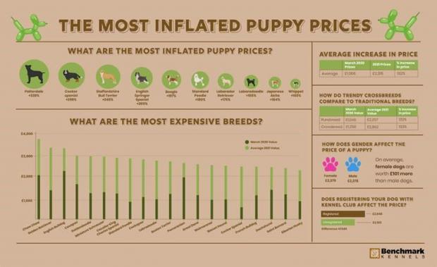 Richmond and Twickenham Times: The most inflated puppy prices. (Benchmark Kennels)