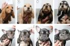 Police release 48 pictures of suspected stolen dogs in bid to find owners