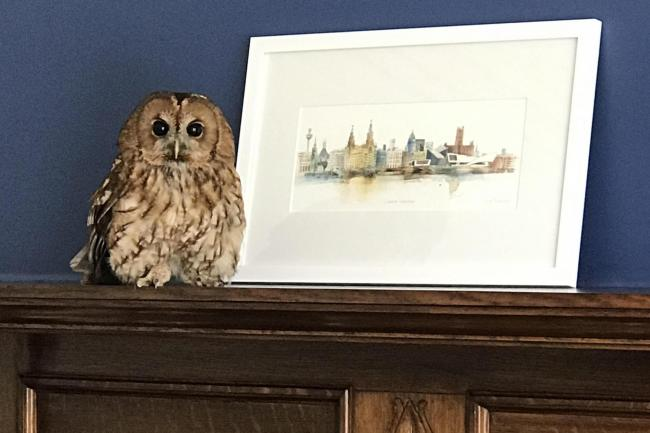 RSPCA rescues owl