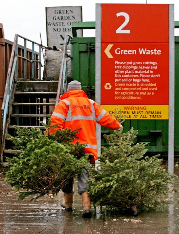 Christmas trees to be collected for recycling next week