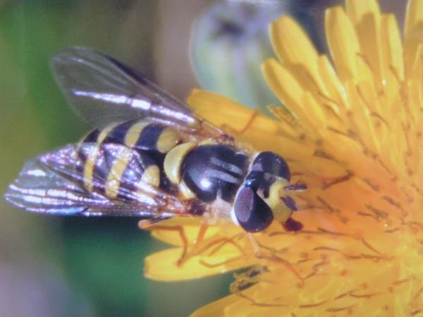 Nature Notes: Insect migration