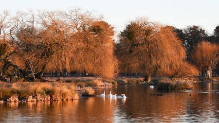 Sunrise at Bushy Park, photo by reader Ron Darbon