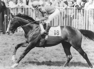 Richmond and Twickenham Times: MISSING: Shergar was kidnapped in 1983