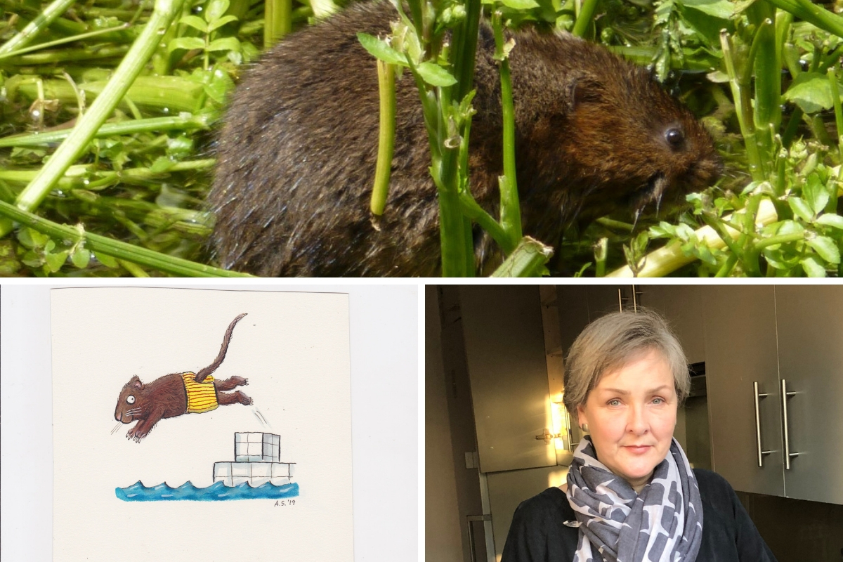 (Top) Water Vole populations have declined in recent years and Enviroment Trust CEO Berny Simcox (Bottom right) is hoping the swimathon can raise vital funds for the river animals.